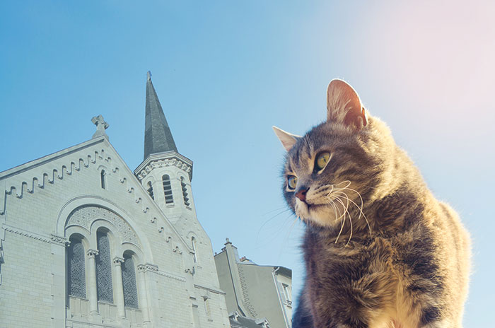 chat regardant le temple