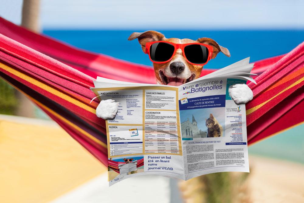 chien lisant le journal